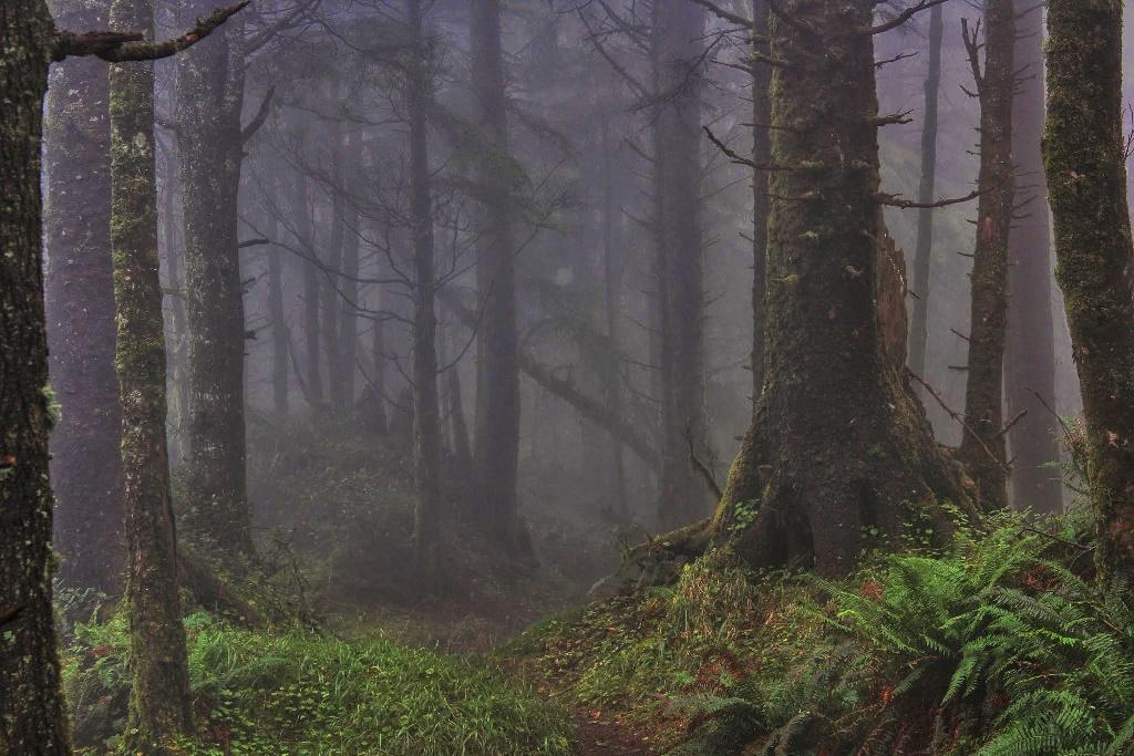 Portland Coast hike