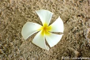 Ko Samet Flower