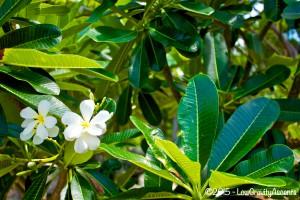 Samet Ville Flowers