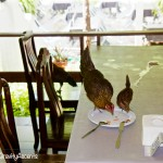 Samet Ville chicken dinner guests